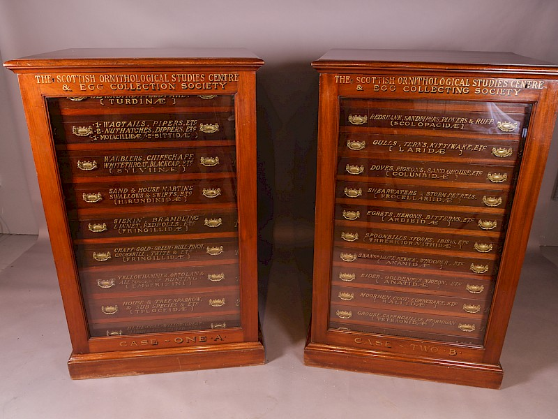 Pair (2) of Ornithological Collectors Cabinets